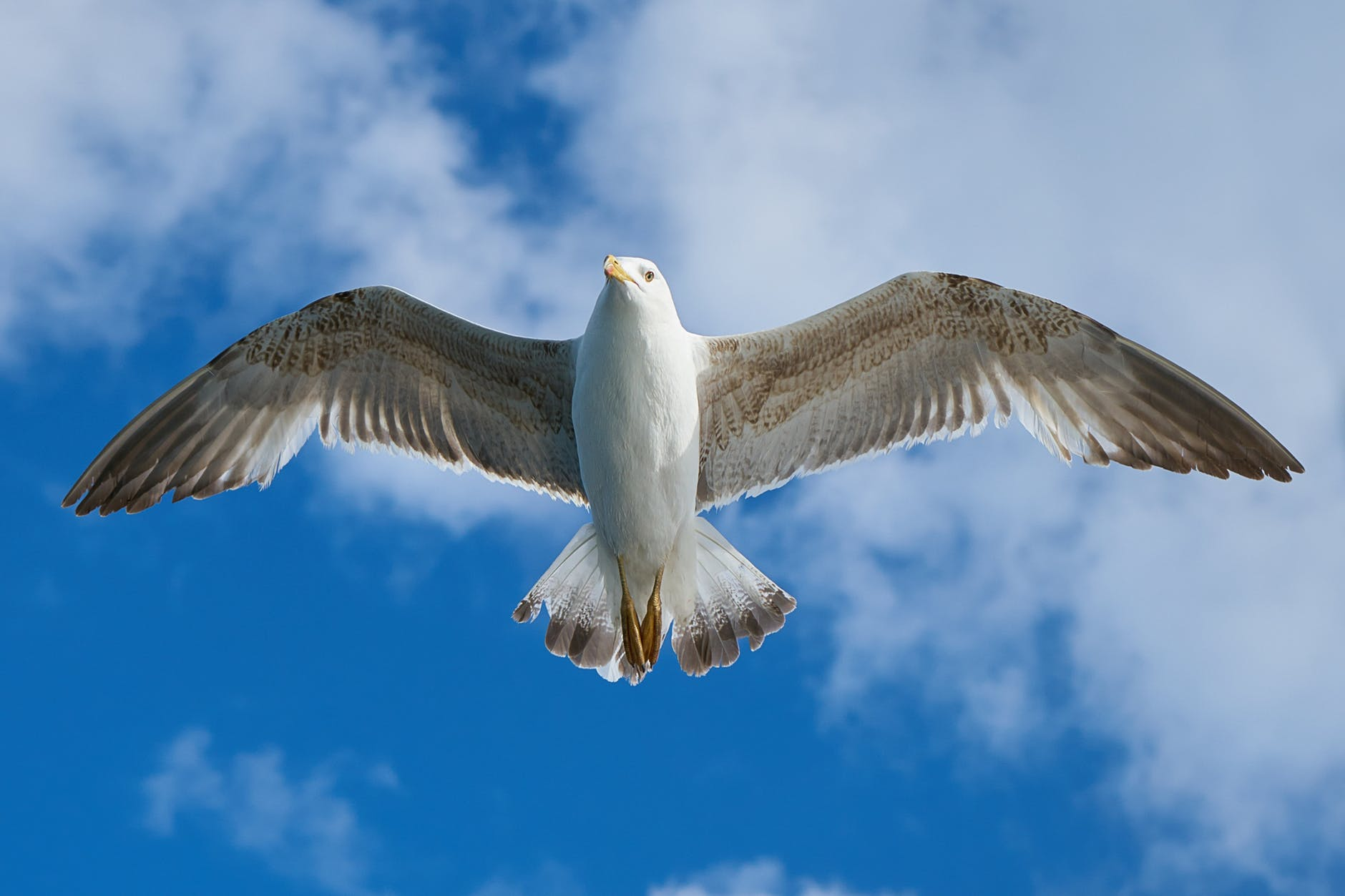 white and grey bird flying freely at blue cloudy sky