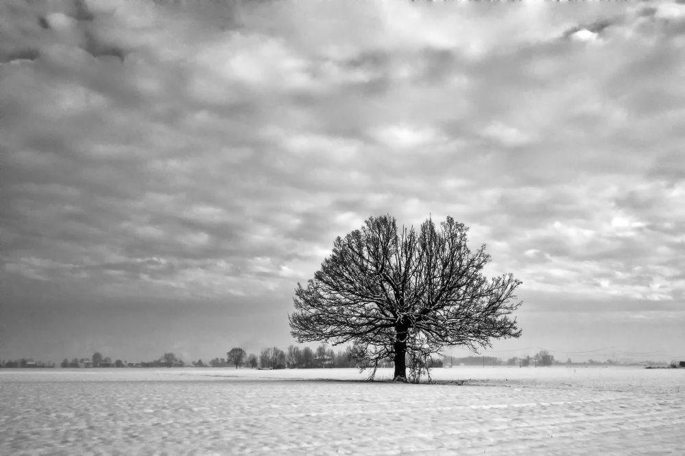 grayscale-photography-of-tree-under-cloudy-sky-2827946.jpg