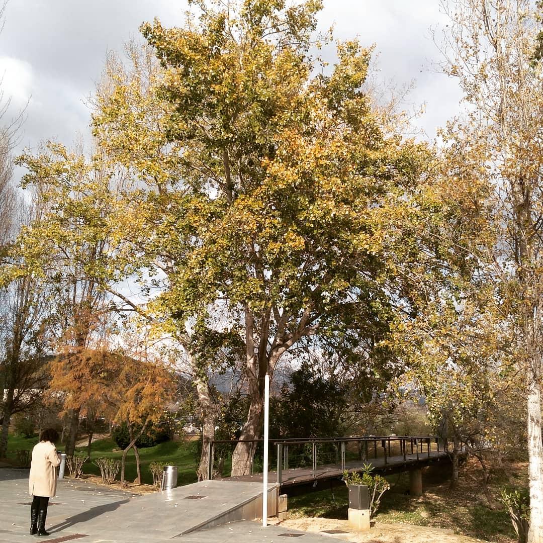 árboles Parc Bit Mallorca