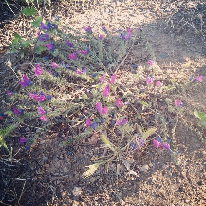 Flores-parcbit