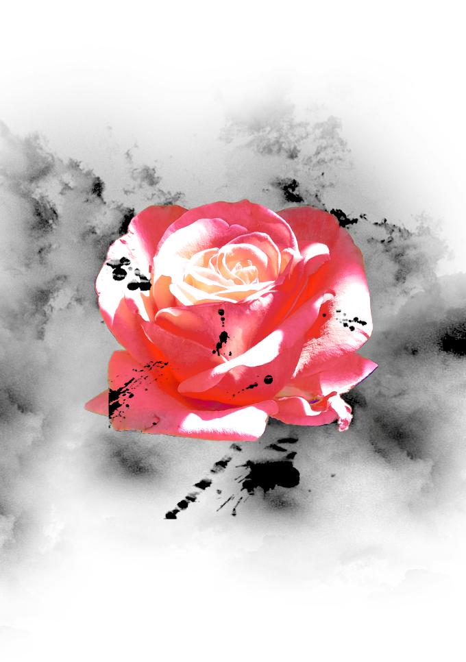 Disello - rosa gris