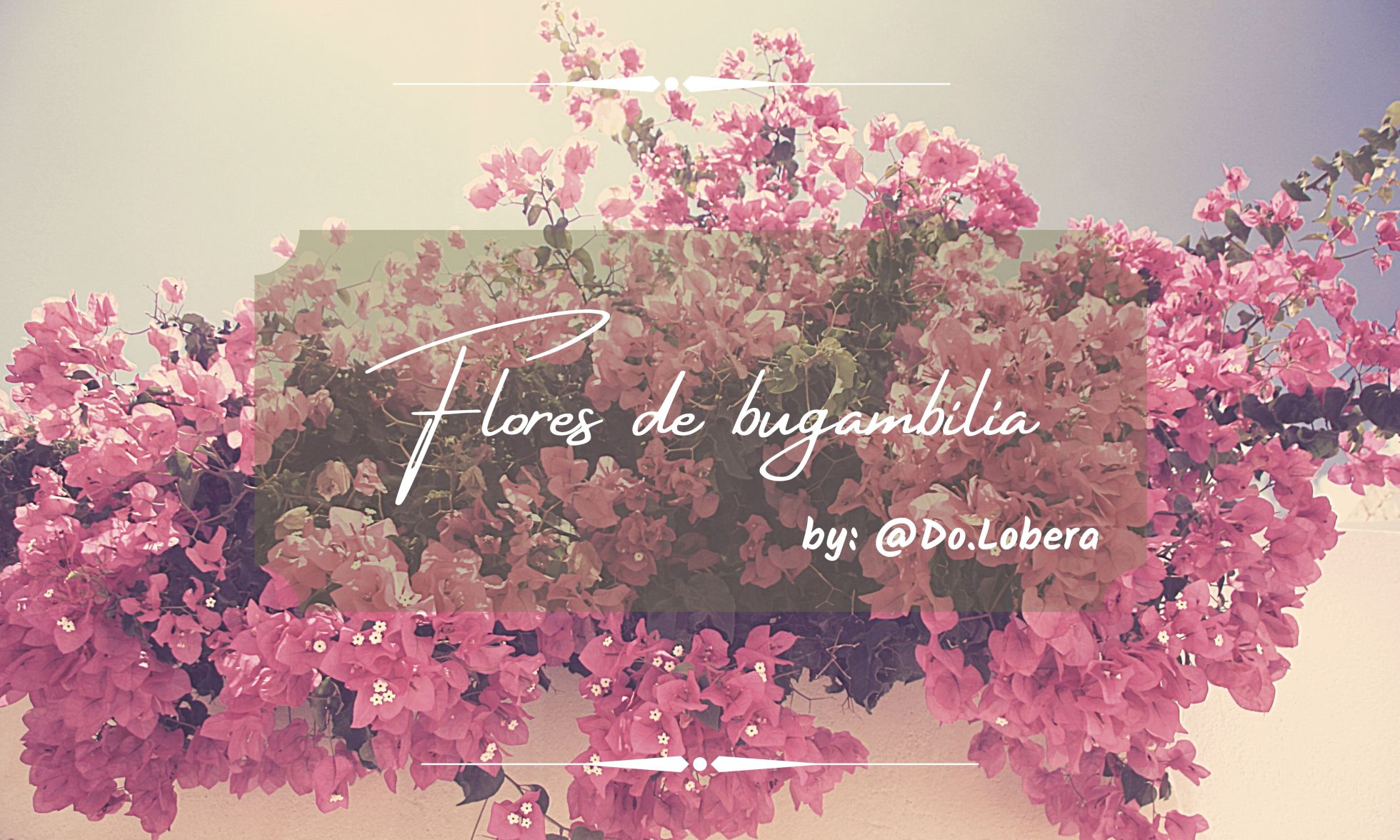 Flores de bugambilia - by Do.Lobera